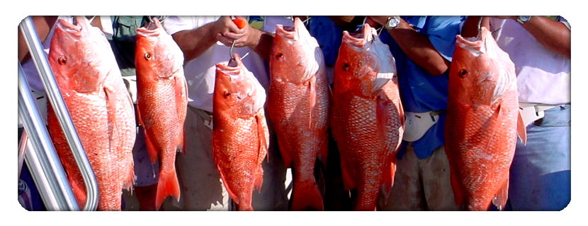 charter fishing destin
